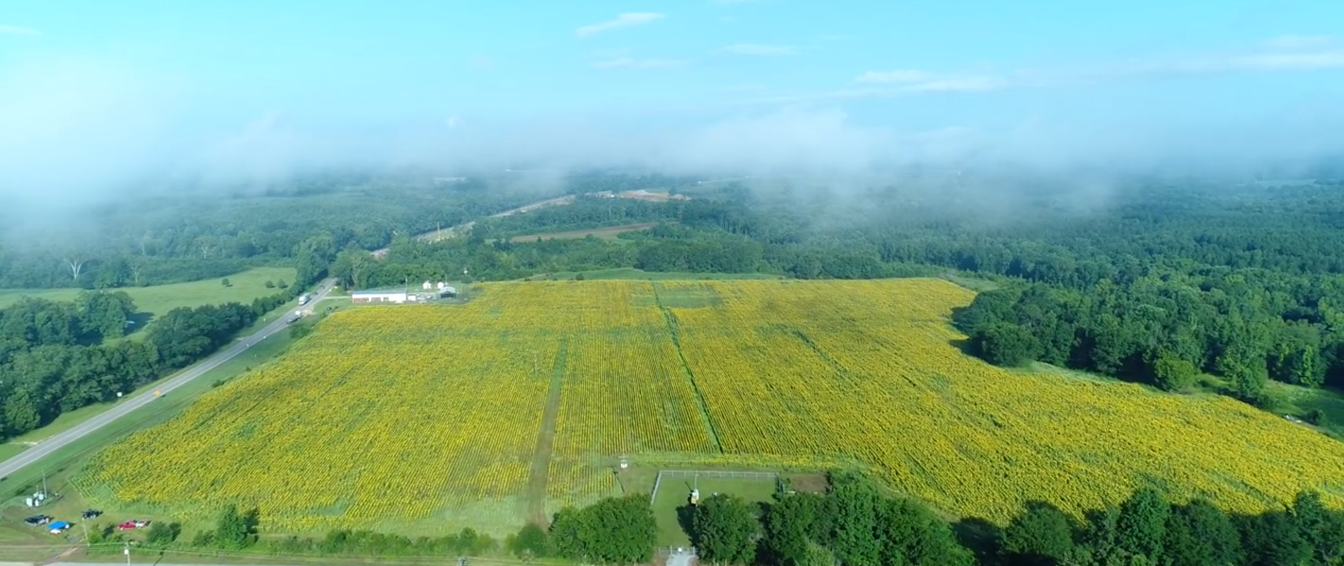 Autaugaville Sunflower Field To Bloom in mid to late August!